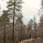 Brandfält Forskningsresan 2007 (1) 1280x1024