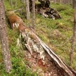 Bumyrhobbens naturskog (11) 1280x1024