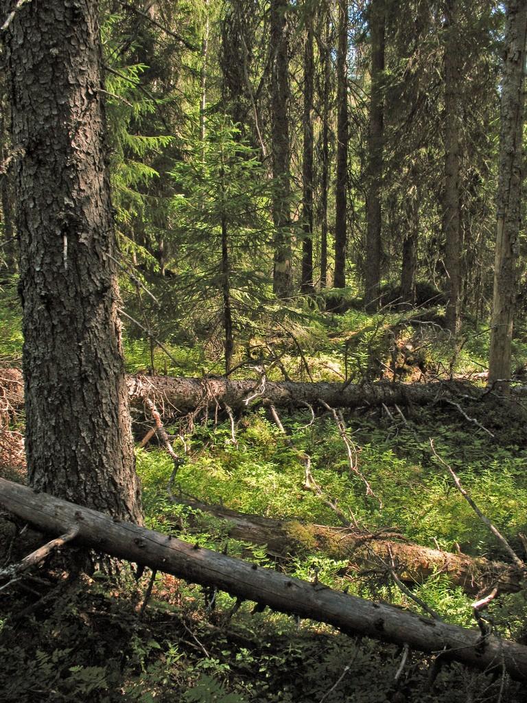 Naturskog – Västerbotten