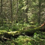 Naturskog Forskningsresan 2007 (7) 1280x1024