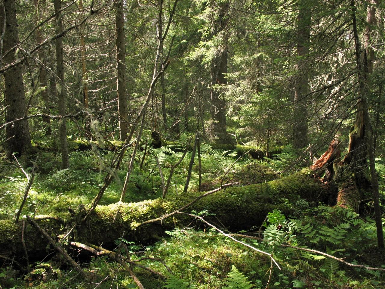 Bildresultat för bild naturskog