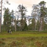 Urskog och hjortron 1280x1024